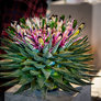 DM i blomsterkunst